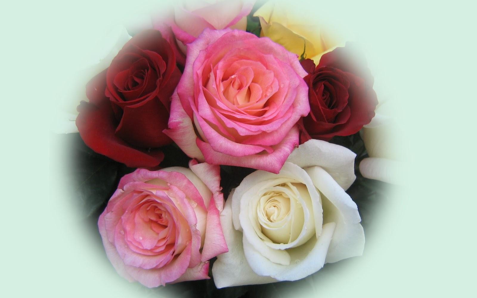 http://3.bp.blogspot.com/-8C887niKpmw/T6Fbp9w7uUI/AAAAAAAAAIE/hm-t9zd8Jiw/s1600/Full-HD-Roses-Bouquet-Wallpaper-Background.jpg