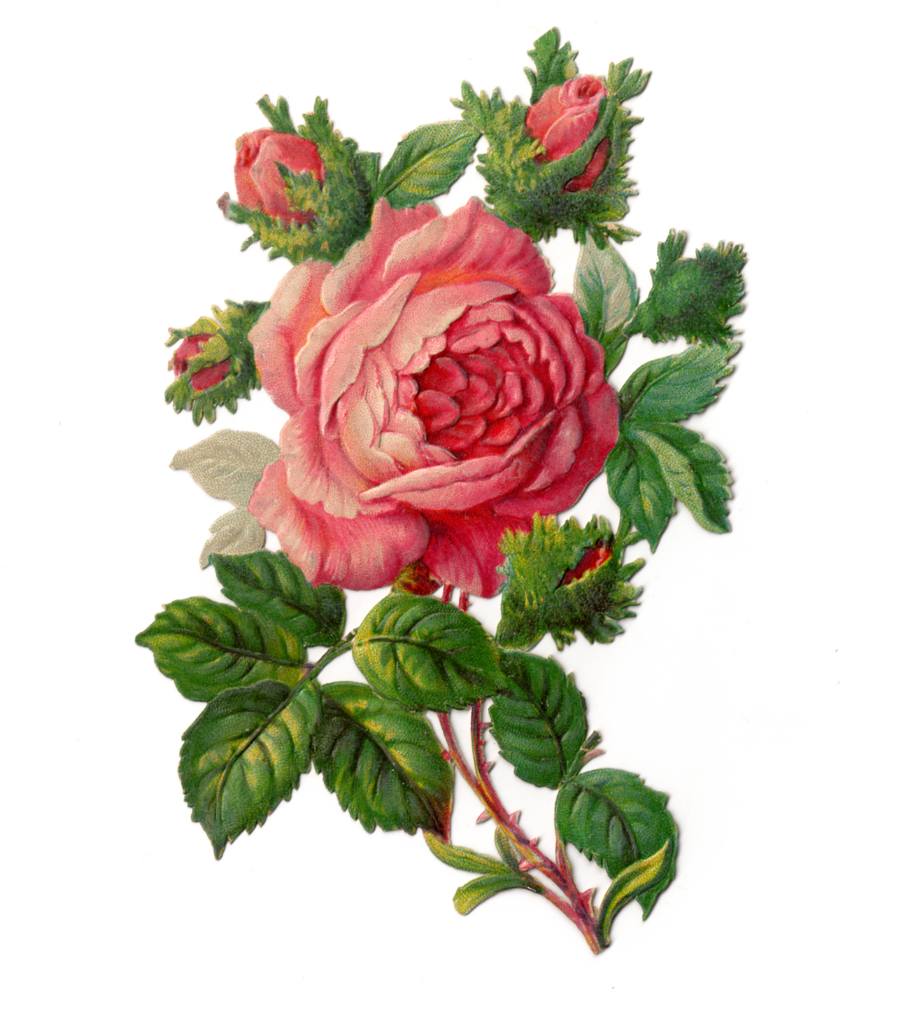 Vintage Clip Art- RoseVictorian Flower Drawings