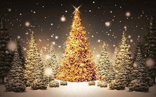 Muchos pinos de navidad iluminados