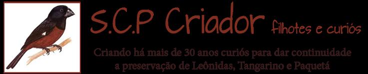 CRIADOR S.C.P.