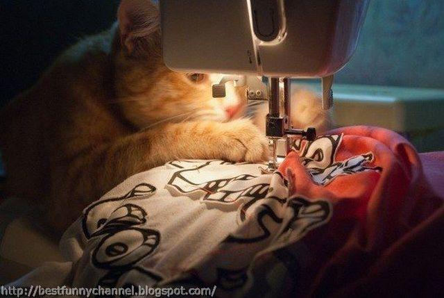 Cat fashion designer.