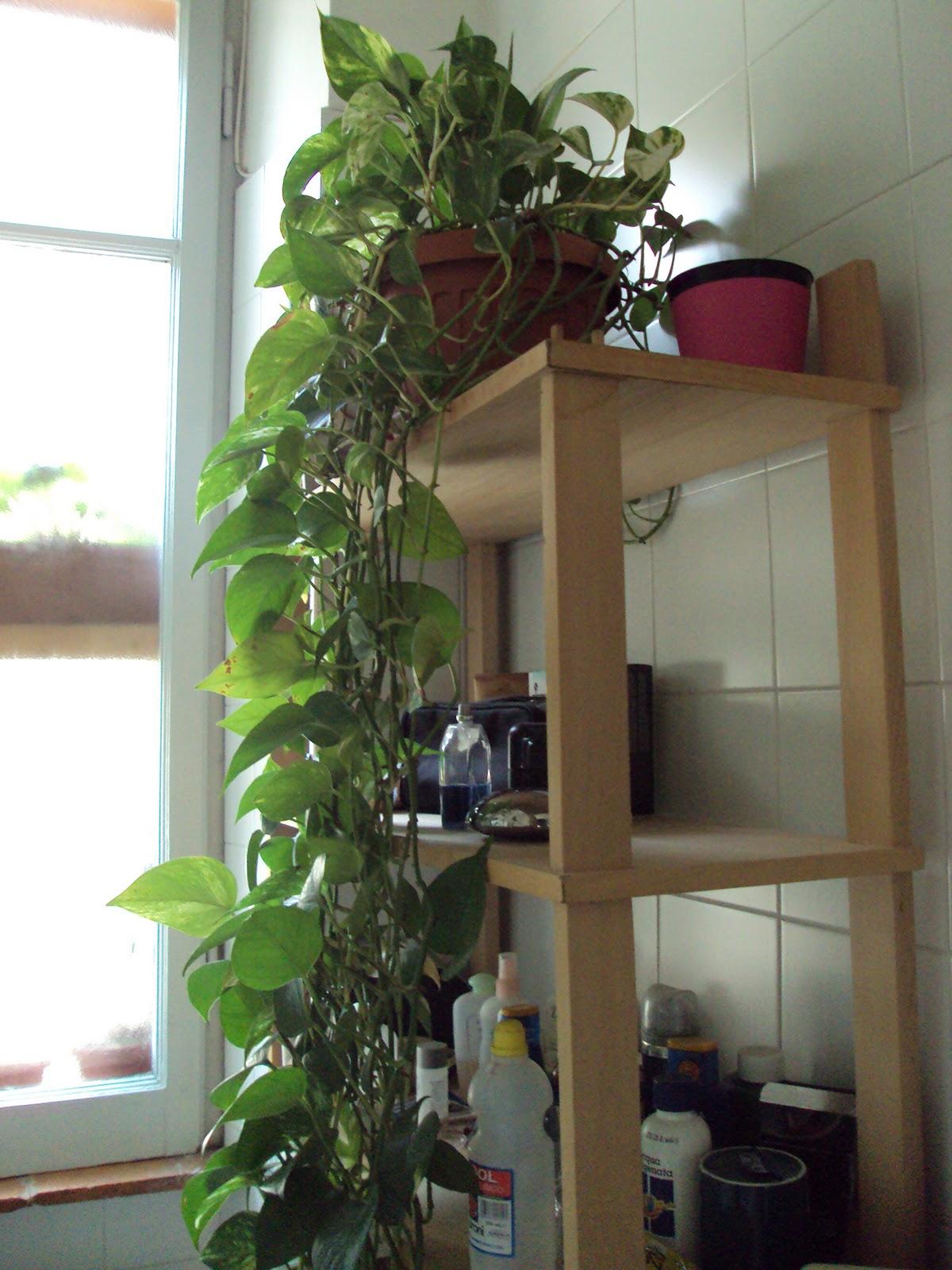 Ho fatto il composto verde di casa e di finestra - A cucina ra casa mia ...