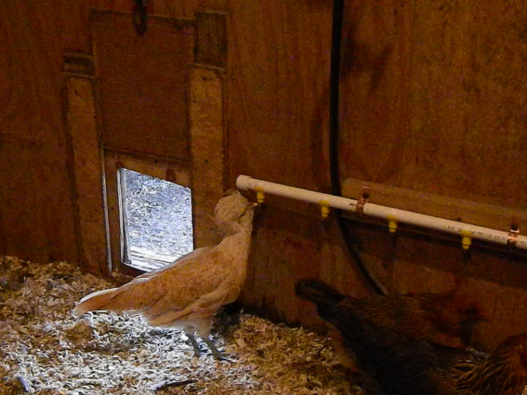 Meanwhile Back At The Ranch Gravity Fed Poultry