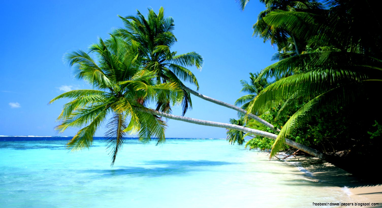 Tropical Beach Scene Wallpaper