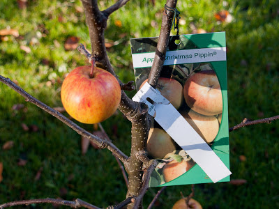Apple tree labels