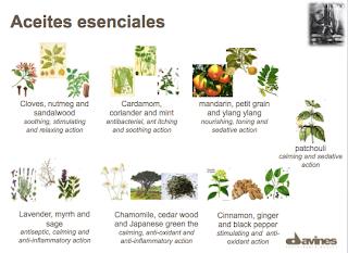 Desarrollo ingredientes Davines, componentes naturales Davines, tendencia del mercado de la belleza.