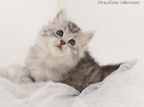 Kitten plans: