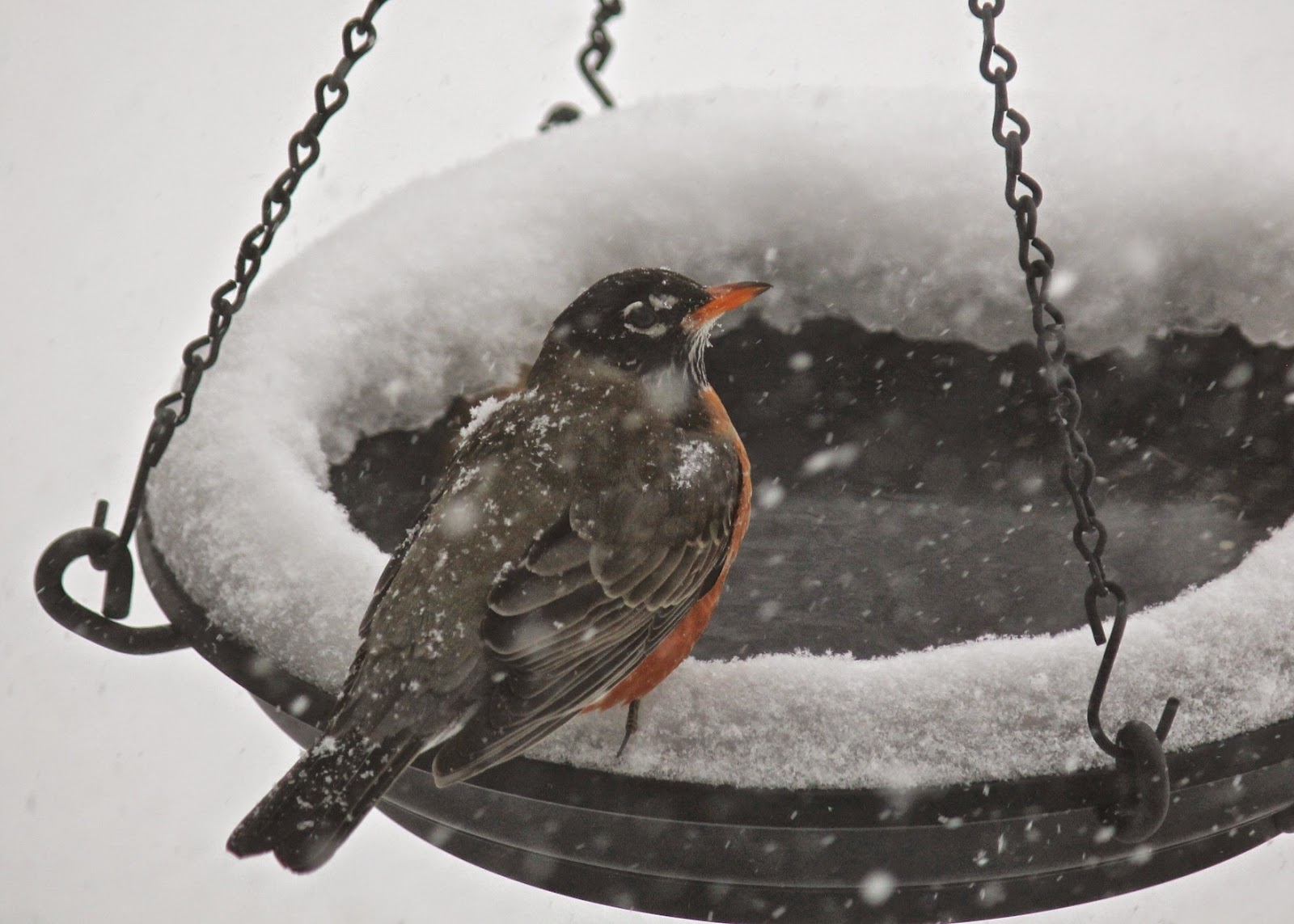 red house garden blizzards and birds