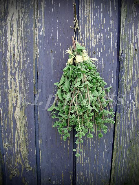 fűszernövény szárítás