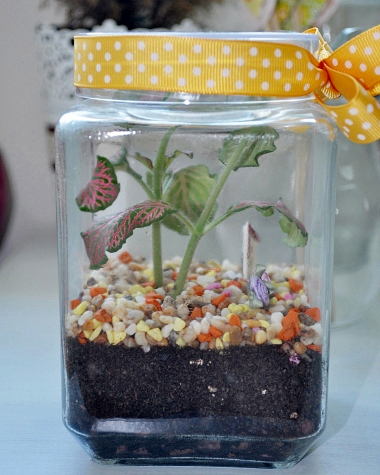 Caring For Your Terrarium Little Green Pot