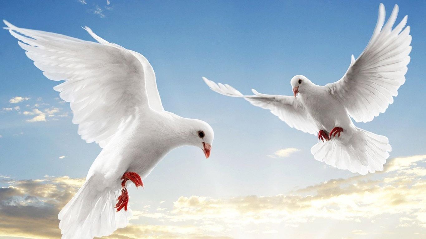 http://3.bp.blogspot.com/-8E-evfL54dI/UAM7JoSQhTI/AAAAAAAAINE/kpqD4bibuWE/s1600/Stunning+Animals+HD+Wallpapers+(32).jpg