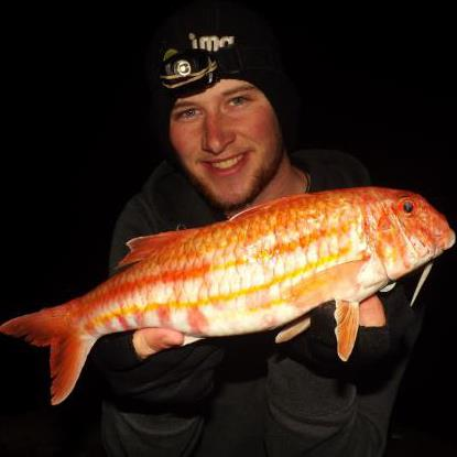 Fishing jersey channel islands november report yet for Red mullet fish