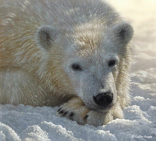 18-Polar-Bear-Cub-Collin-Bogle-Animal-Wildlife-in-Art-www-designstack-co