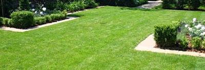 ปลูกหญ้าขาย