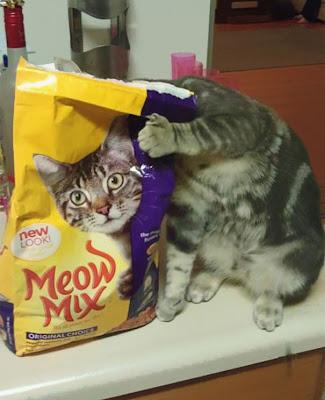 ilusión óptica del gatito y la bolsa de comida