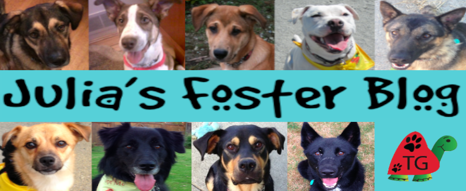 Julia's Blog: Fostering Adoptable Dogs for Turtle Gardens Animal Rescue