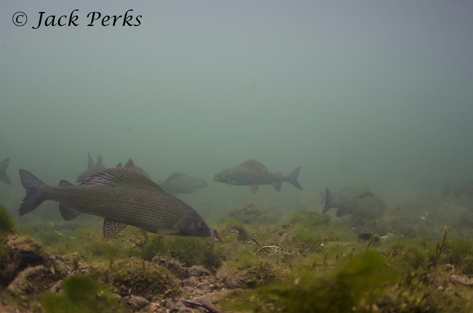Jack perks photography peak district trout grayling for Peak fishing times for today