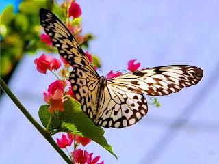 hermosa mariposa sobre flores pequeñas
