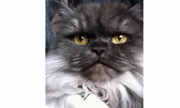 بالصور .. أغلى 5 قطط في العالم