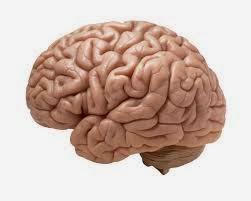 Practicas que Dañan el Cerebro