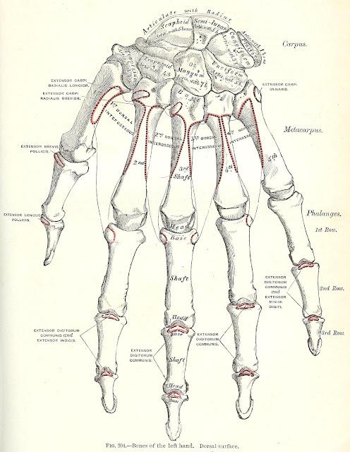Antique Halloween skeleton graphics printables | www.knickoftime.net