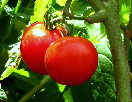 Healthy Foodie, fruits, vegetables, diet, weightloss