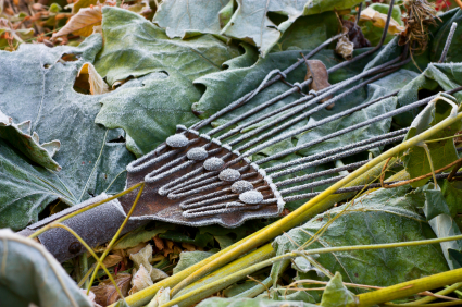 5 Steps to Winterize Your Vegetable Garden