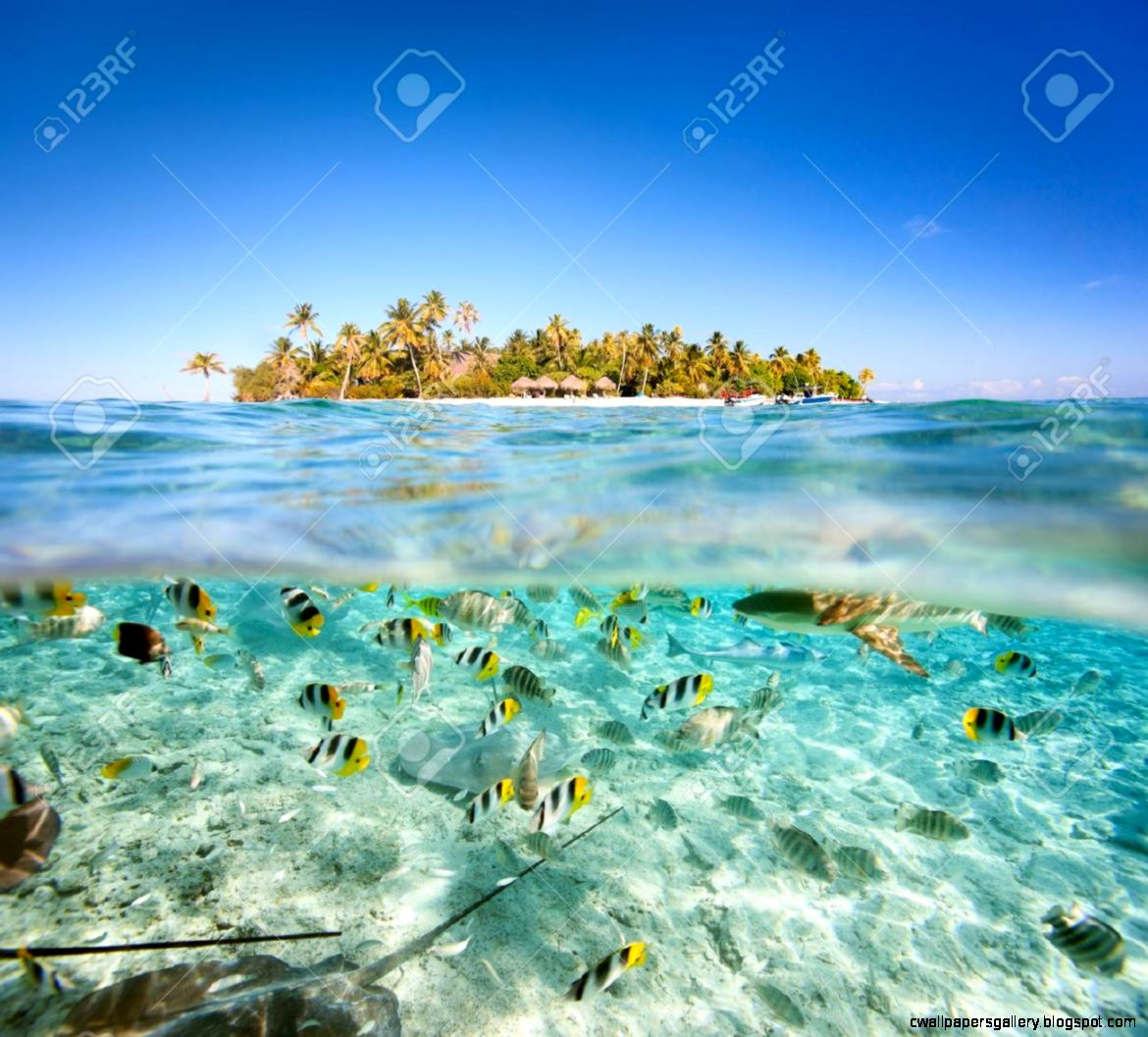 Beautiful Tropical Island Above And Underwater Stock Photo