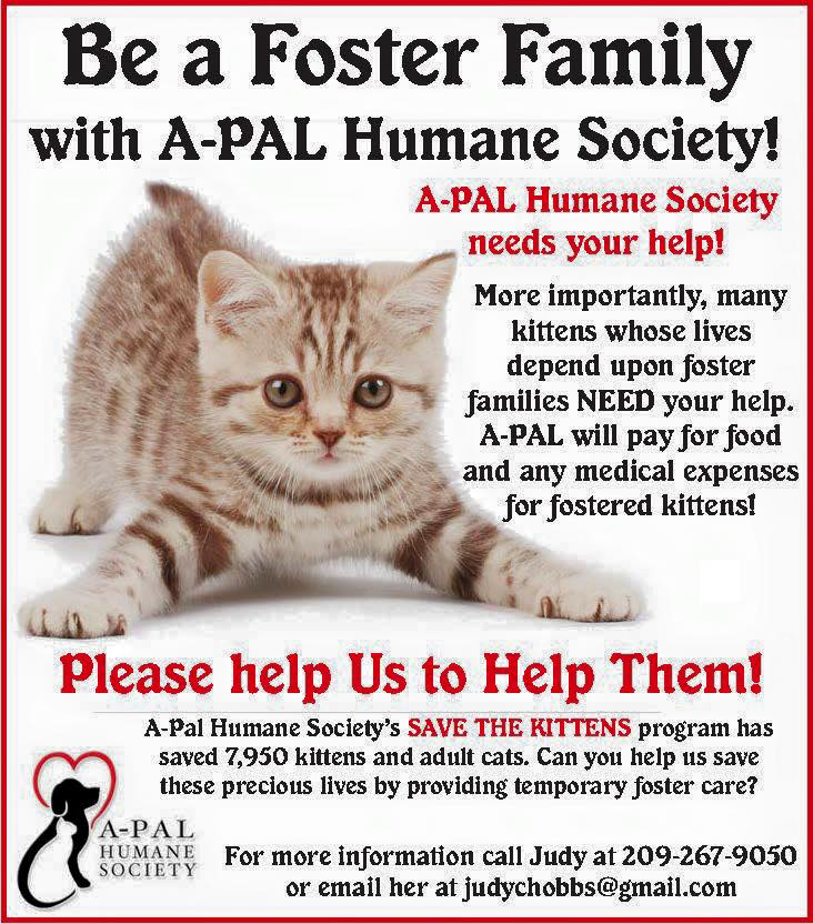 APAL's Save the Kittens Program