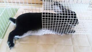 トンネルで寝るうさぎ、ミニレッキス