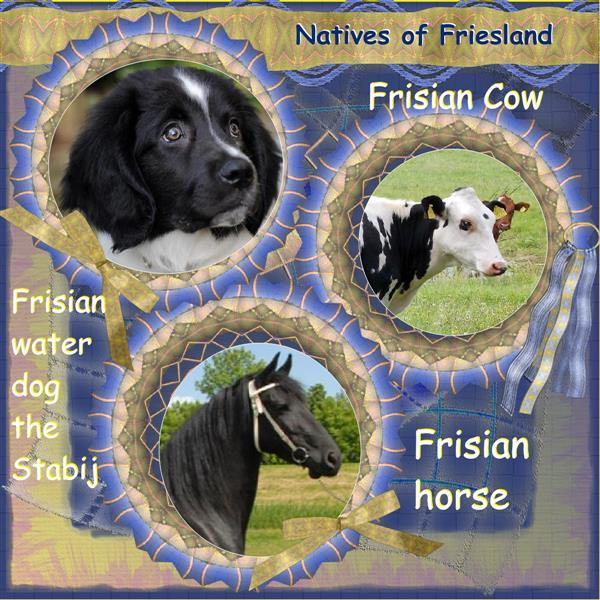 Native Frisian's