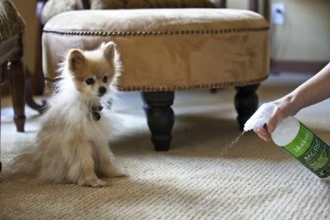 Como quitar el olor a perro en casa