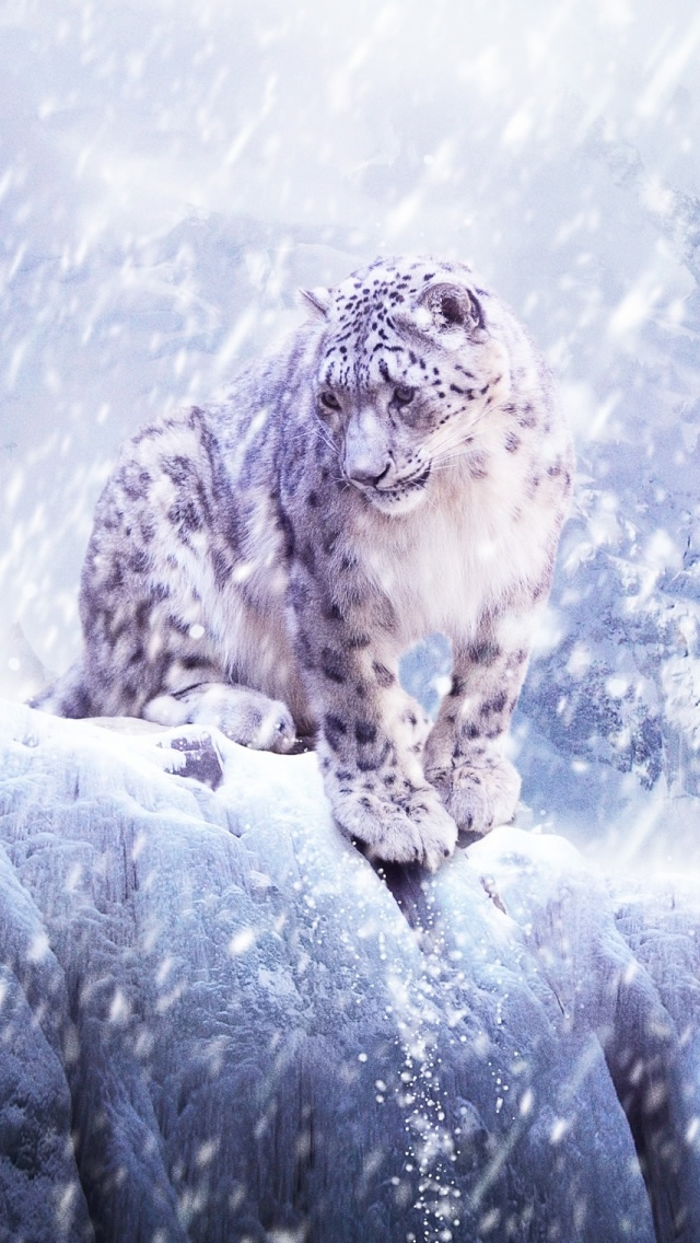 Leopards In The Snow iPhone 5 HD Wallpaper