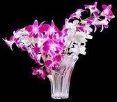 Tanaman Hias, tanaman Anngrek, Bunga anggrek, anggrek, gambar bunga anggrek