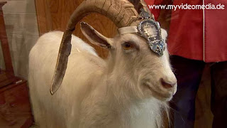 Batisse, the Royal Goat of Quebec