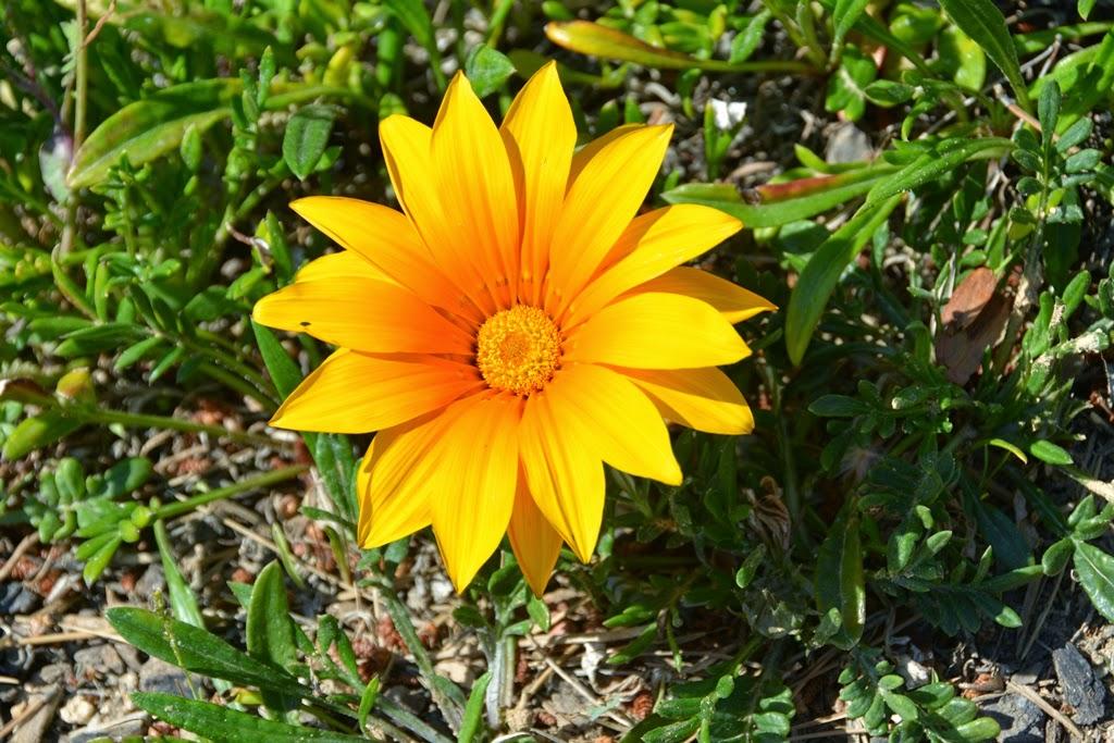 Salou Beach flowers