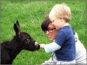 Newborn Donkey in Sparta, NC