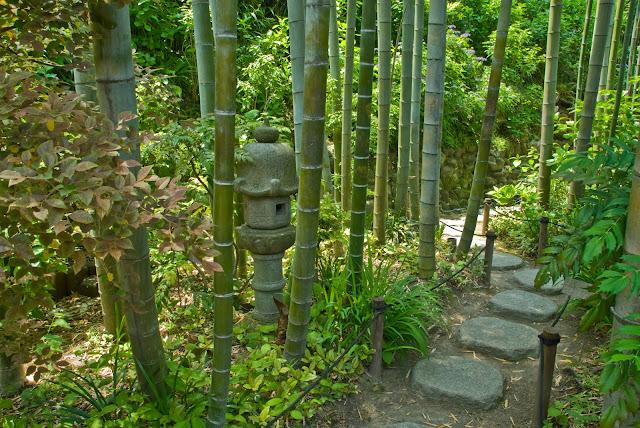 Bamboo Grove1