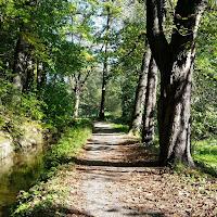 Laufen auf einem Waldweg