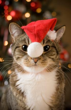 Risultati immagini per gatti natalizi