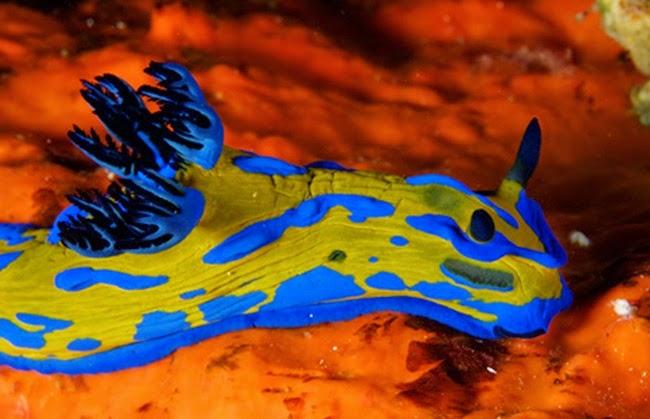 أجمل الأسماك الاستوائية الملونة   - صفحة 3 Colorful-tropical-fishes-22