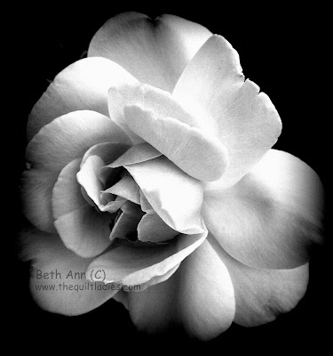 Black and White Rose by Beth Ann (C)