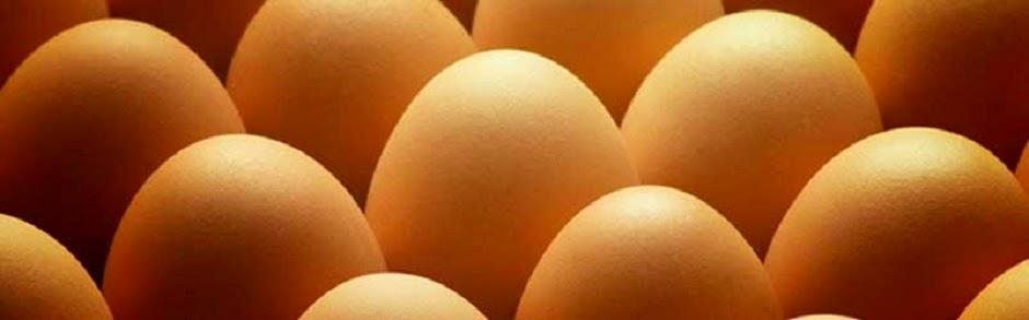 Agen Telur Ayam