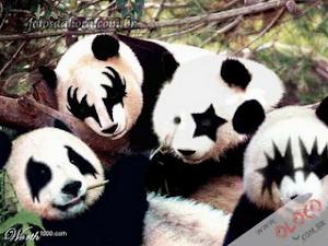 Pandas Roqueiros