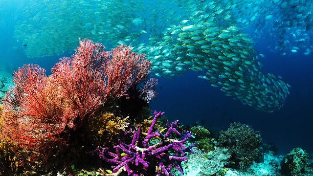 Su altı mercan resifi manzara hd duvar kağıdı