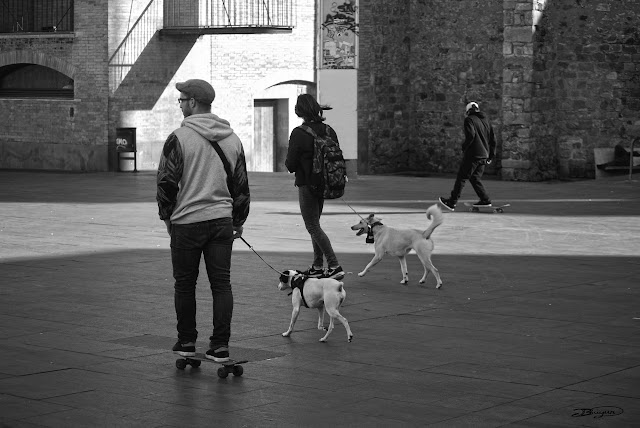 Skate life with dogs street Barcelona