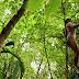 Imágenes demuestran la existencia de una tribu aislada en Brasil