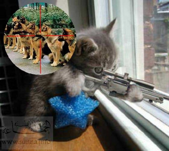 funny cat with gun picture  funny cat shooting dogs