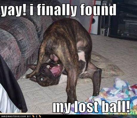 funny%2Bdogs-01.jpg