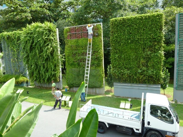 Janeiro 2015 jardim de siguta - Como hacer un muro verde ...